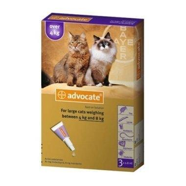 2949-advocate-for-cats-spot-on-80-for-large-cats-over-4-kg