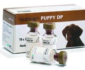 Nobivac Puppy DP_tcm91-133704